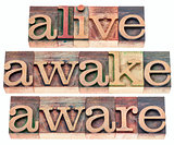 alive, awake, aware