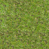 Grass Texture.