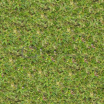 Grass Texture.
