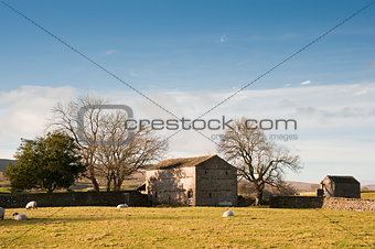 Typical stone barn and sheep in Yorkshire Dales England