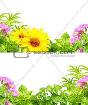 Frames with summer flowers