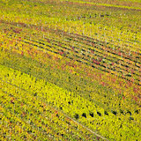 vineyards in Velke Bilovice region, Czech Republic