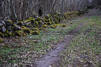 Anemone foot path