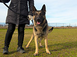 german shepherd and owner