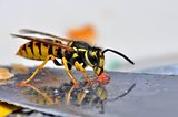 Wasp macro