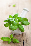 basil in mortar 