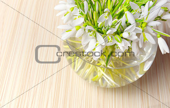 Snowdrops in a vase