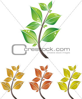 Branches of leaves