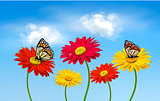 Nature spring gerber flowers with butterflies  Vector illustrati