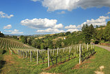 Hills and vineyards of Piedmont. Northern Italy.