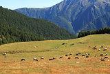 Alpine pasture in northern Italy.