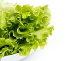 fresh lettuce salad in bowl