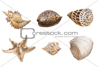 Seas shells watercolor