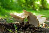 Unusual Mushrooms