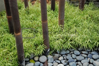 green grass and bamboo in the parks