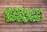 green plant on the wooden floor in the parks
