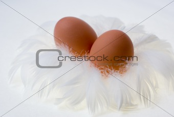 eggs in feather's nest