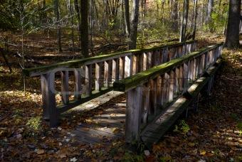 Bridge with Moss