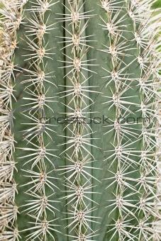 Cactus big