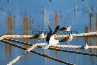 Seagulls in the rope