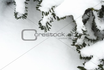 frame of pine branches with snow
