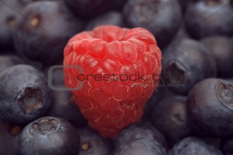 raspberry on the bilberry background