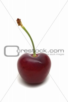 one cherry on white background