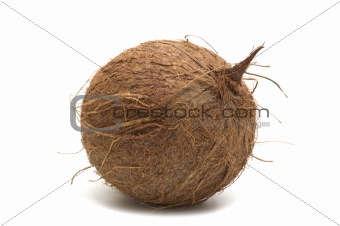 one coconut on white background