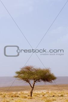 one lone tree in desert