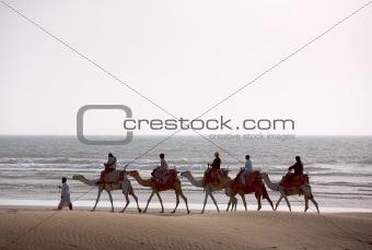 Camel train silhouette