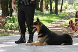 Police Dog 1