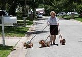 Struggling to Walk Yorkies
