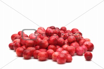 cowberry on white background