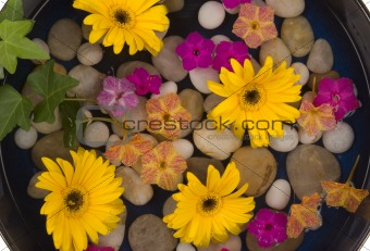 Daisies and Pebbles