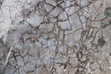 concrete or cement texture