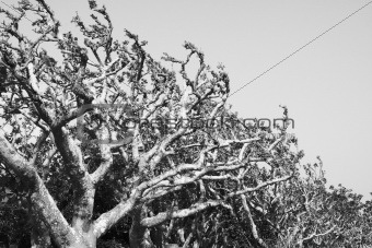 Freaky trees