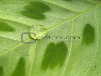 waterdrop on leaf