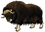 muskox