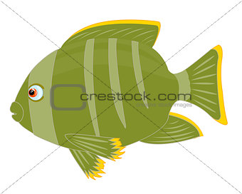 Tropical fish on white background