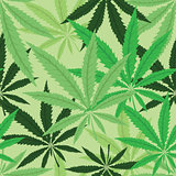 Wallpaper with green leaves of cannabis
