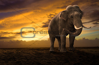 elephant walking outdoor on sunset