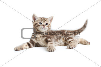 pretty marmoreal british kitten lying isolated on white