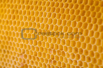 bee honey in honeycomb angle view