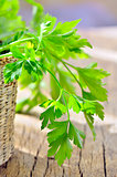 parsley in braided basket isolated