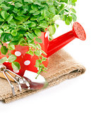 green plants in red watering can with garden tool
