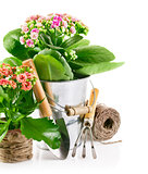 spring flower in pail with garden tools