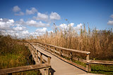 A wooden bridge through the Everglades