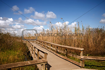 A wooden bridge through the Everglades