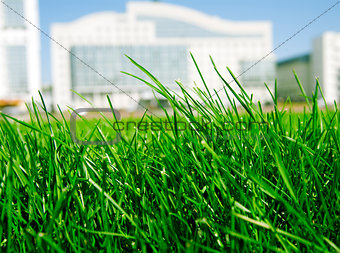 juicy green grass on a background modern buildings