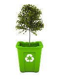 Maple tree growing in recycle bin